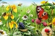 ОБЖД. Назойливые насекомые