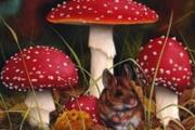 Осторожно с грибами