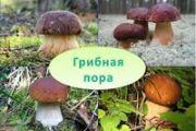 РЕКОМЕНДАЦИИ ГРАЖДАНАМ: Как собирать и готовить грибы?