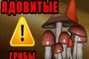 Отравление грибами и ядовитыми растениями
